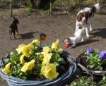 Voorjaar bij de Roedel Thuis