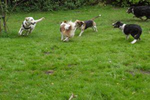 Honden spelen lekker buiten op de buitenspeelplaats